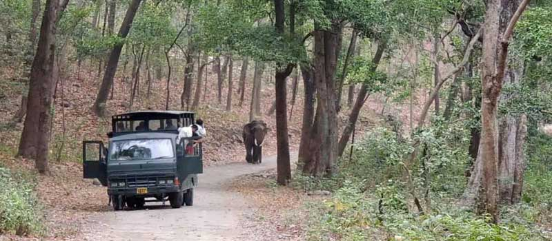 Dhikala Canter Safari Online Booking, Jim Corbett National Park, Corbett Tiger Reserve