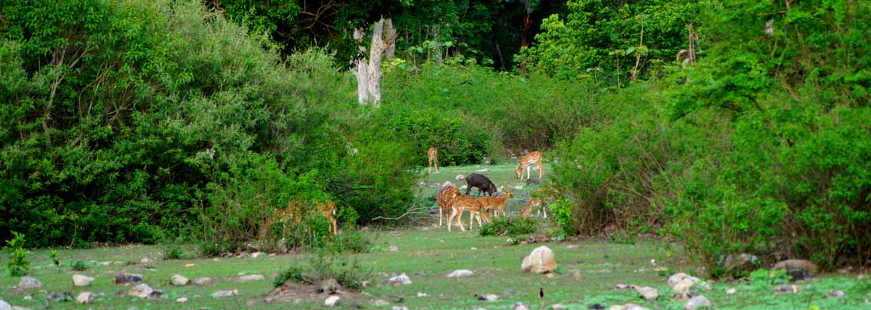 Conservation projects, Jim Corbett National Park, Corbett Tiger Reserve