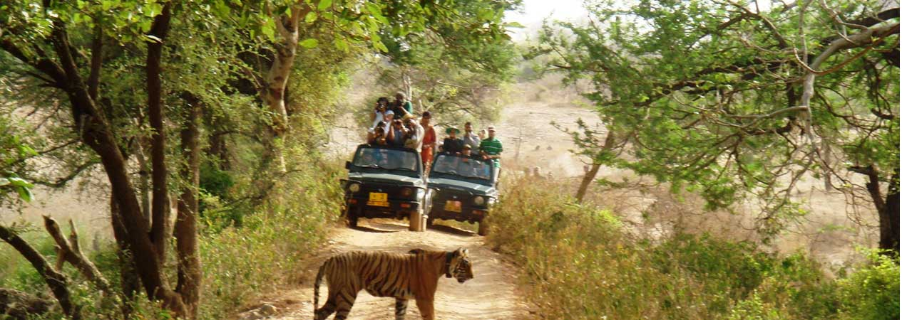 Corbett Group Tour, Jim Corbett National Park, Corbett Tiger Reserve