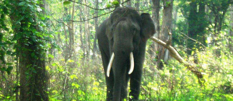 Corbett Elephant Safari Online Booking, Jim Corbett National Park, Corbett Tiger Reserve