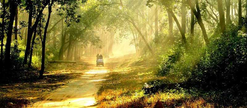 Corbett Jeep Safari, Jim Corbett National Park, Corbett Tiger Reserve