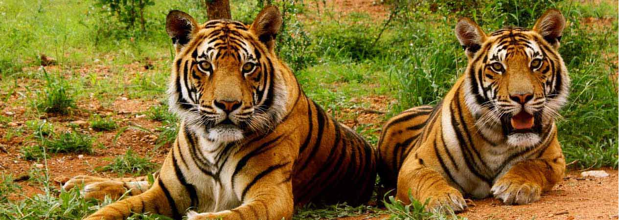 Corbett Tour Package, Jim Corbett National Park, Corbett Tiger Reserve